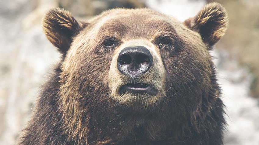Mon premier ours