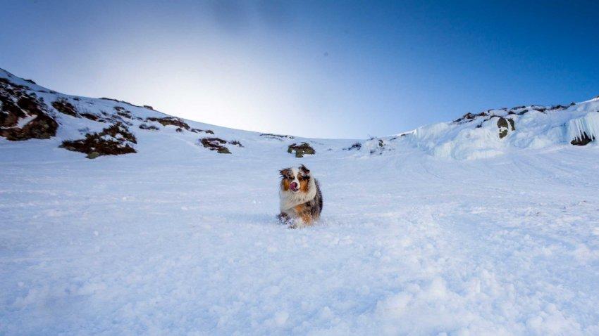 Skier avec son chien en toute sécurité