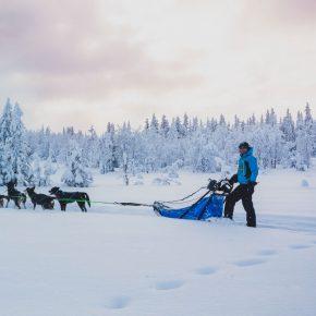 Thibaut Branquart et son attelage sur une piste enneigée de Norvège.
