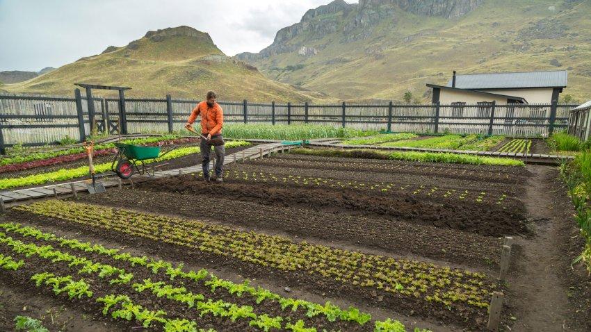 Un homme s'occupe d'un jardin potager bio