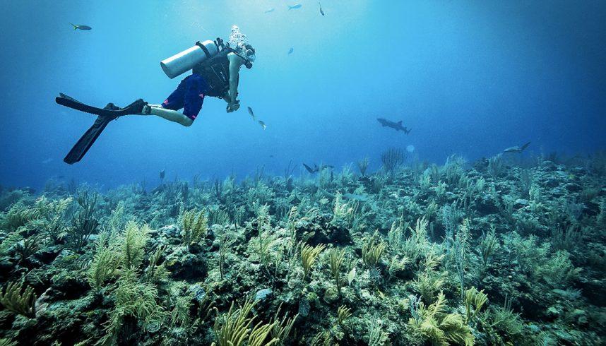 La barrière de corail au Belize