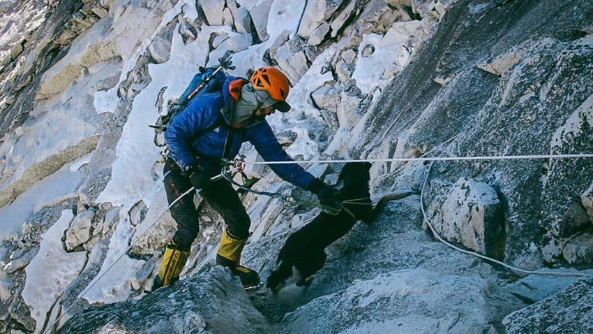 Le chien Mera sur une paroi rocheuse assuré par un alpiniste