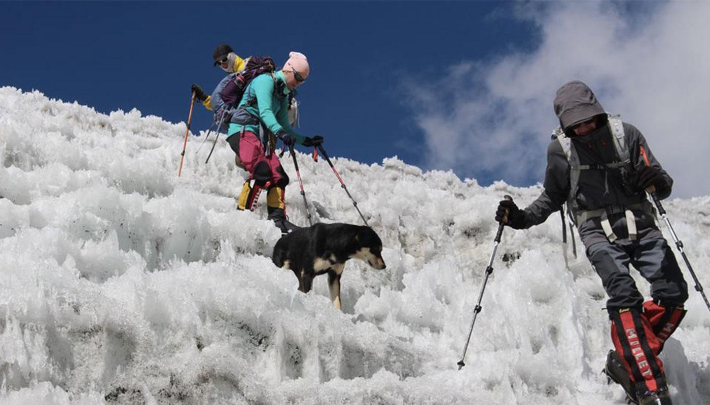 Le chien Mera entame une descente au côté des alpinistes