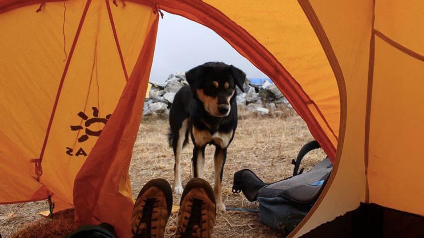 Le chien Mera à l'entrée d'une tente du camp