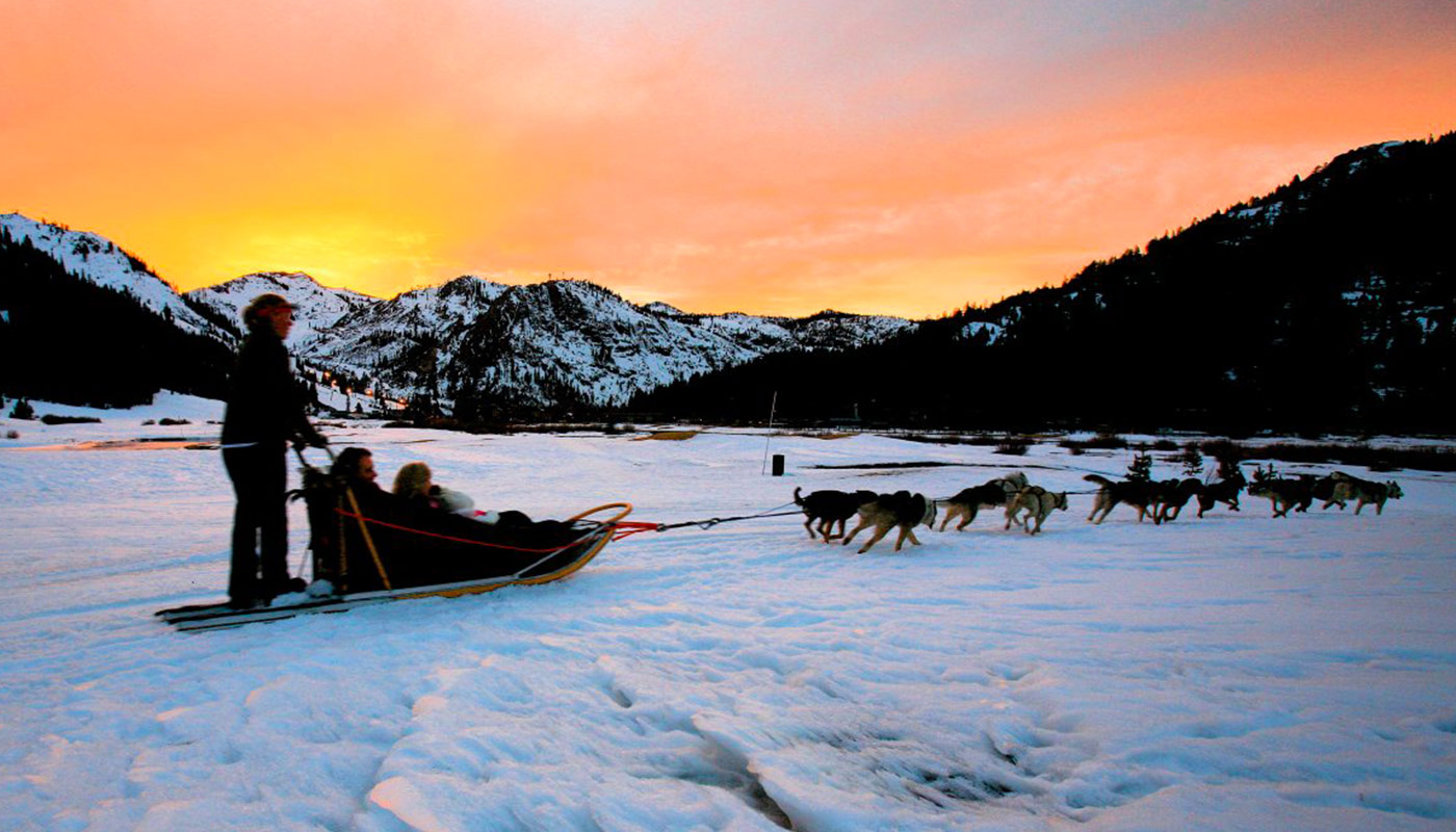 Attelage de chiens de traineau en Alaska sur une piste enneigée