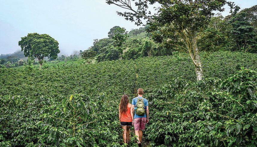 Les plantations de café vers Santa Barbara, au Honduras