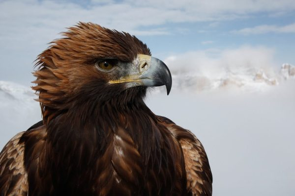 Aigle in Planète hostile National Geographic