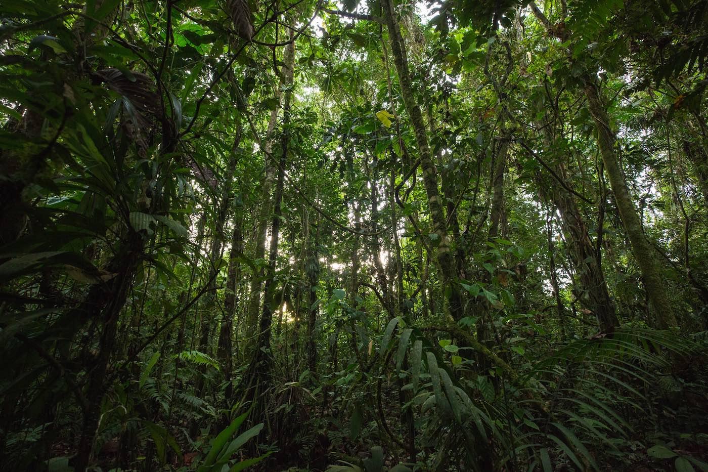 jungle en Equateur