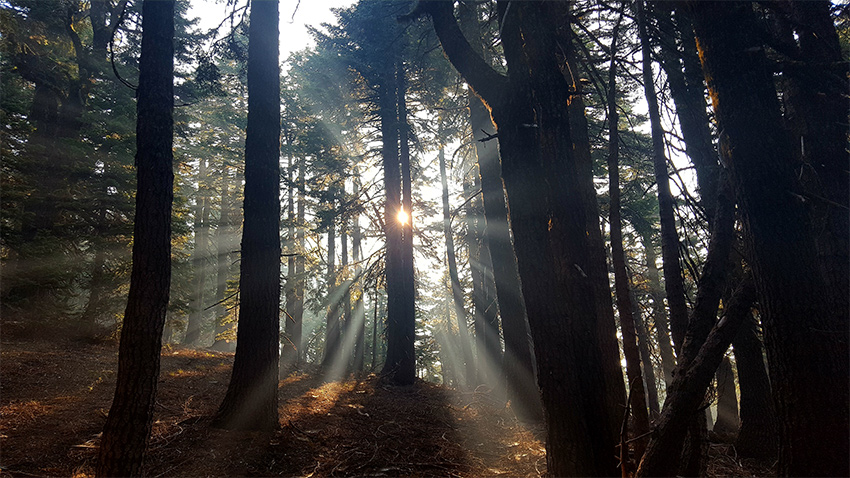 Mi. 1683 – Magie de la lumière à travers le rideau d'arbres, quelques miles avant la frontière Californie/Oregon