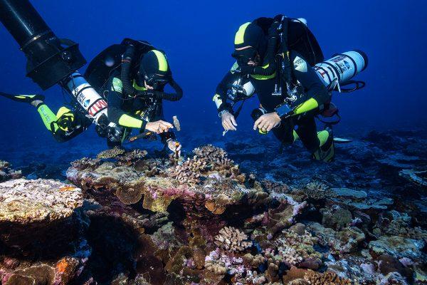 """Collecte d'échantillons de coraux dans la """"twilight zone"""""""