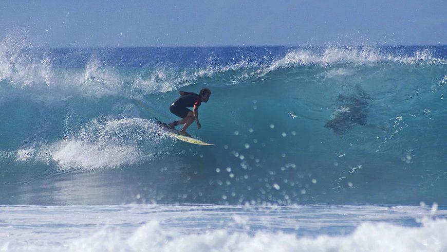 Surfeurs et humains, une relation pacifique.