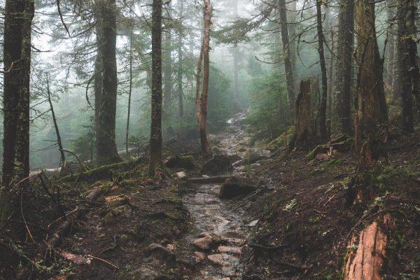 forêt sous la pluie