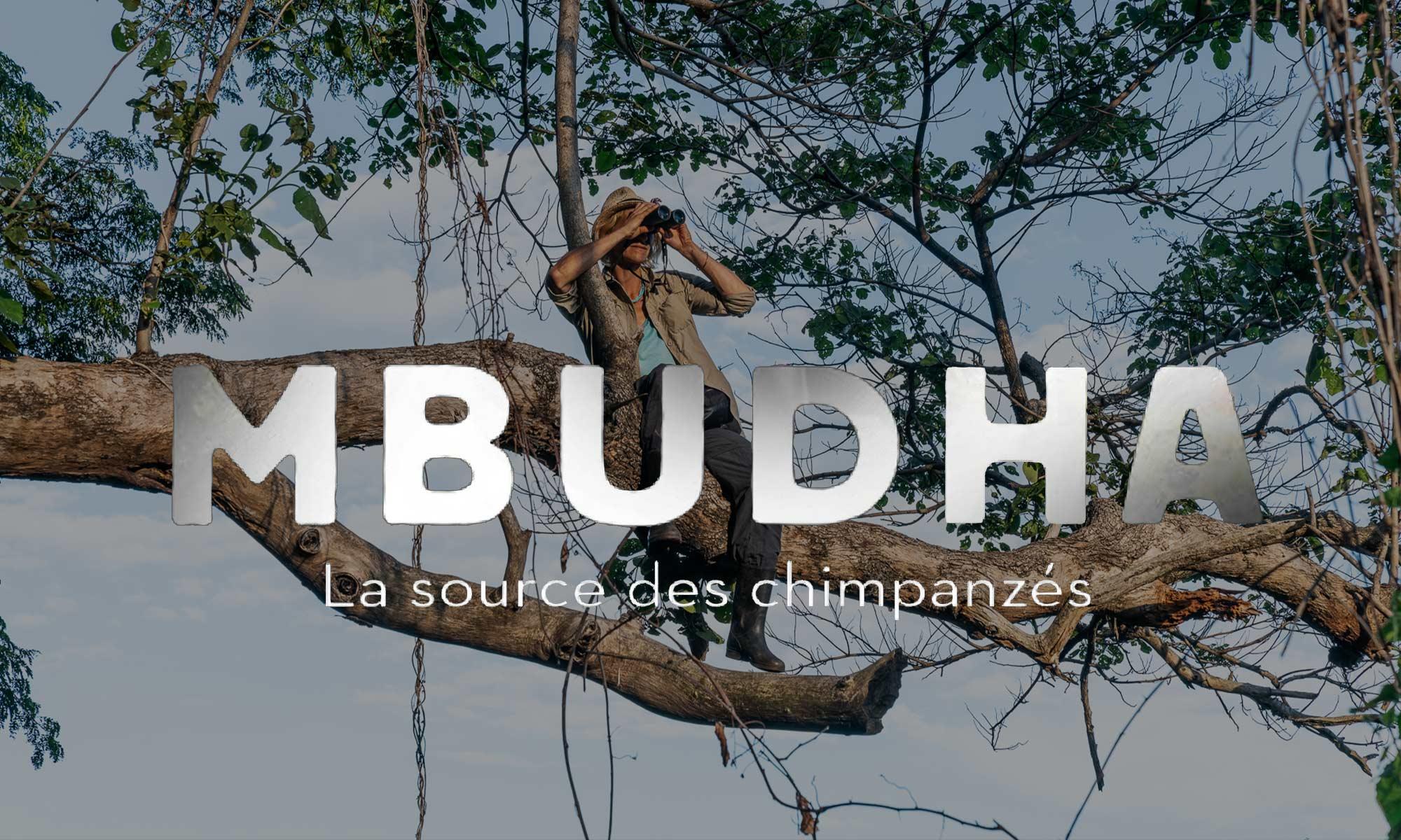 Mbudha, la source des chimpanzés