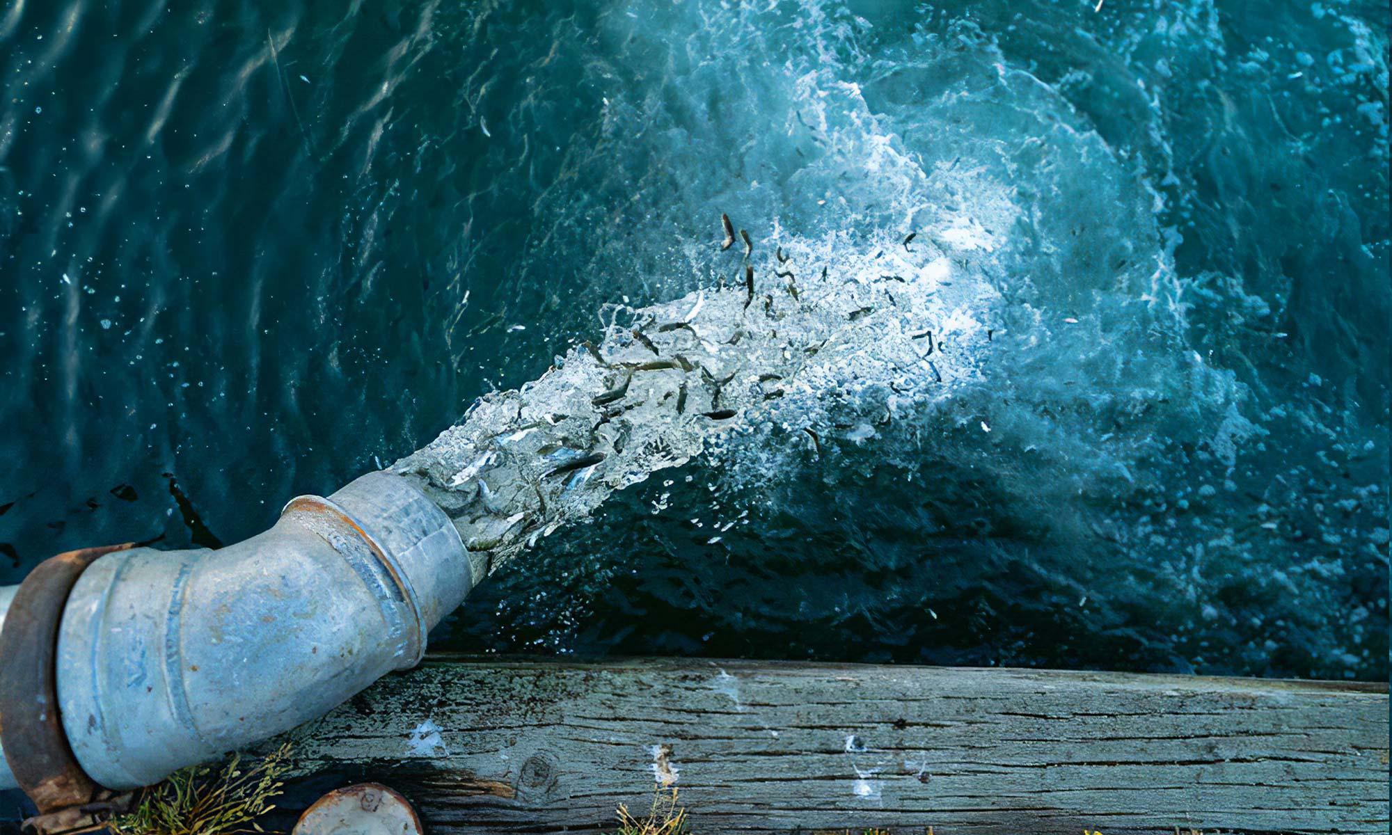 """""""Artifishal"""", le film choc de Patagonia sur la salmoniculture"""