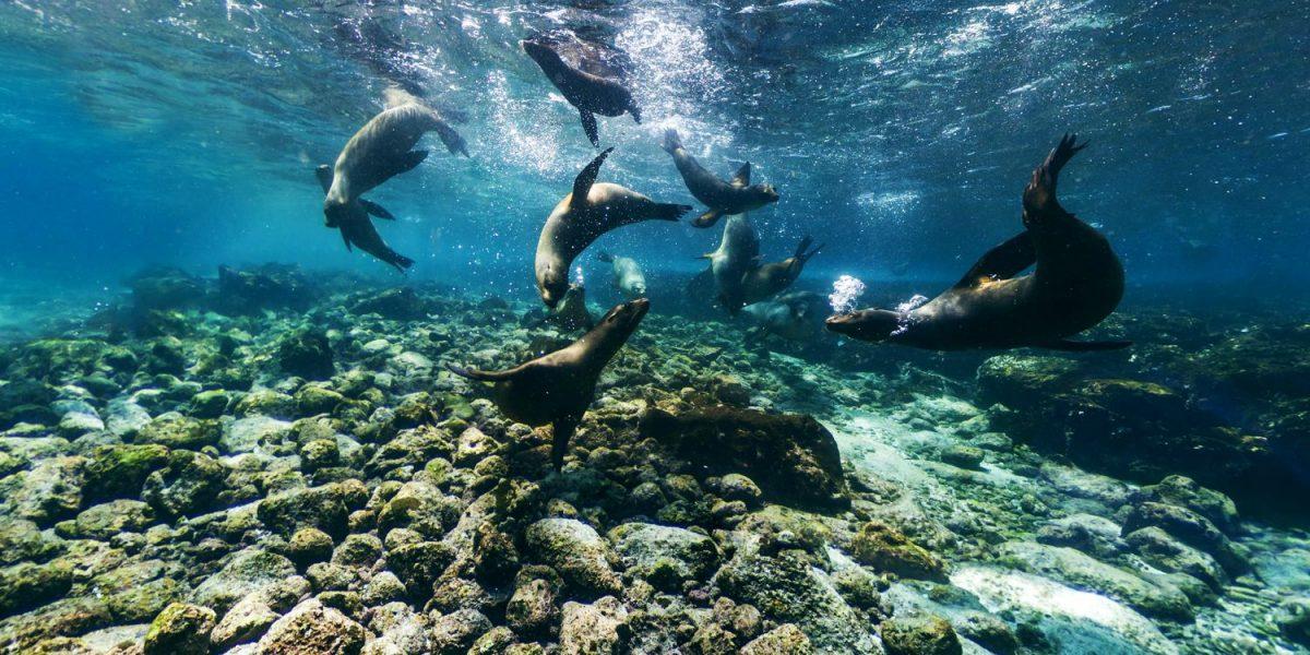 Îles Galapagos, Equateur