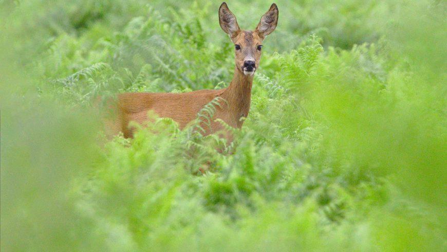 Déconfinement : Comment voir des animaux sauvages