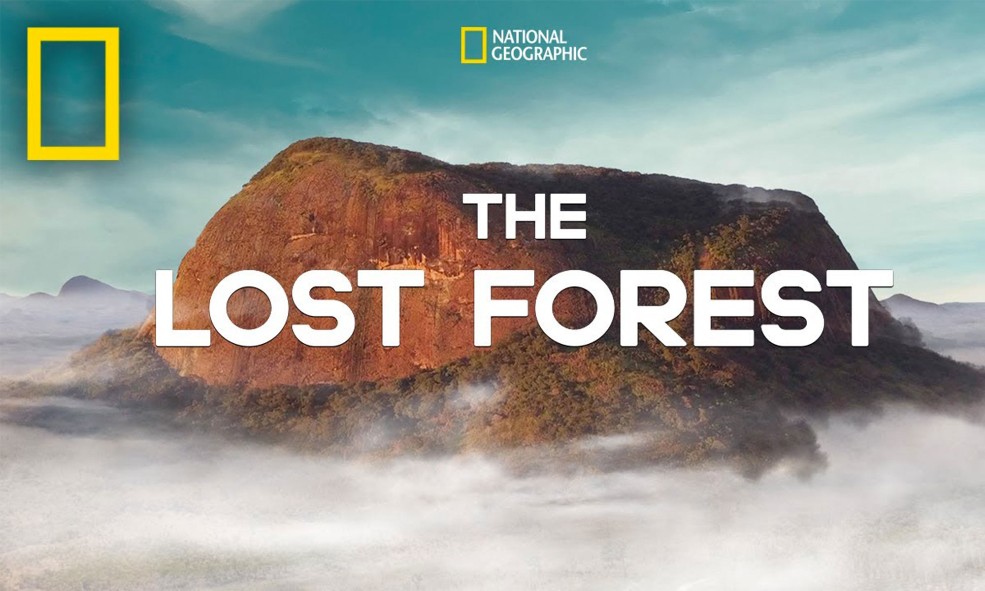 the lost forest