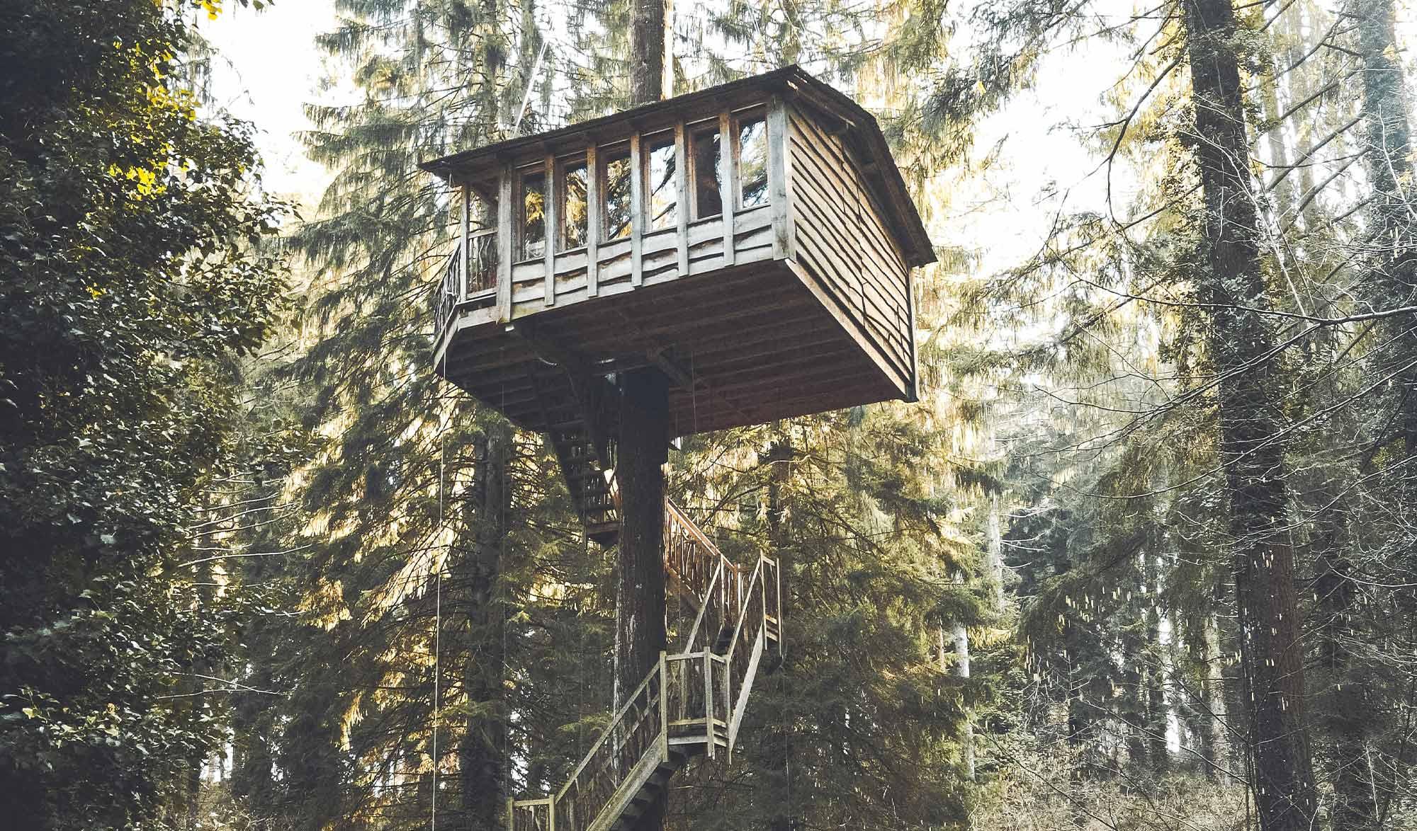 Cabane perchée dans un arbre