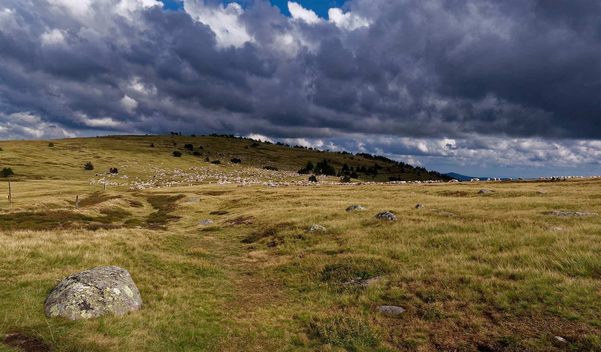 50 ans du parc national des Cévennes