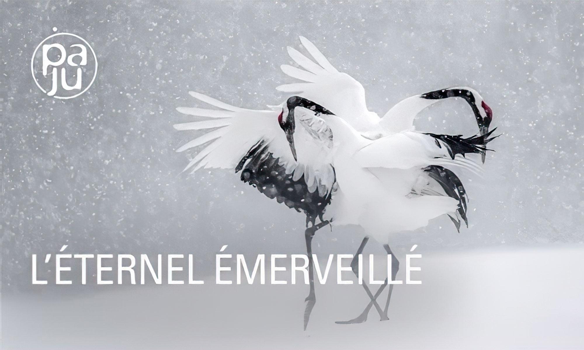 Vincent Munier : L'éternel émerveillé