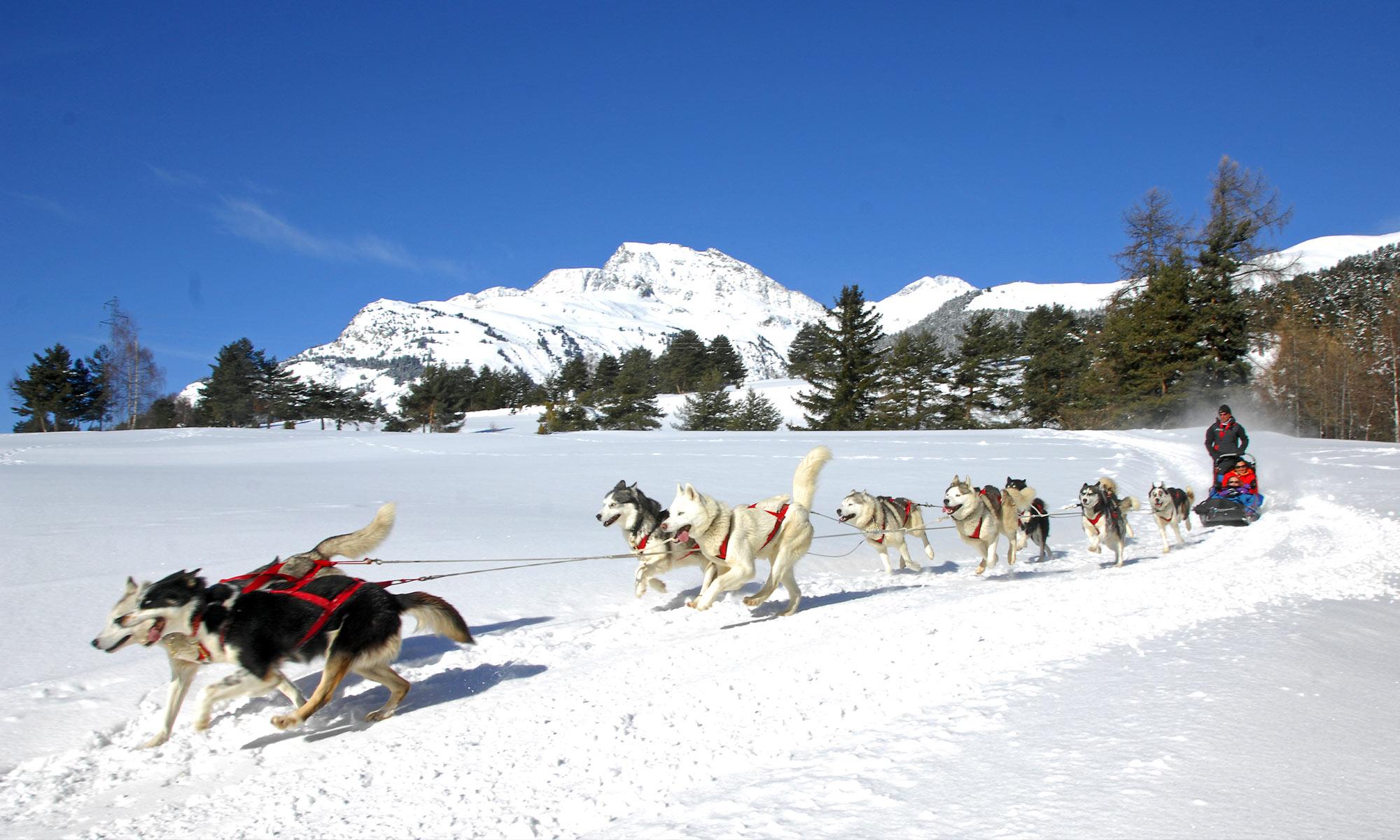 Haute-Maurienne Vanoise : chiens de traineaux