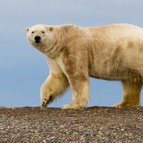 Bonne nouvelle : En Alaska la vente de la concession pétrolière de Trump a été un échec