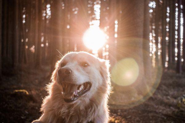 Randonnée : les drones et les chiens interdits dans le Parc national des Pyrénées