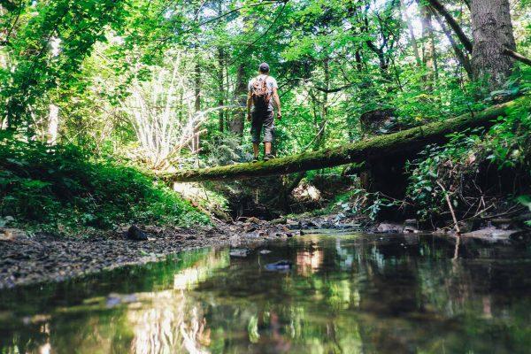 Vars bivouac en forêt