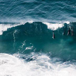 Dauphins jouant avec les vagues